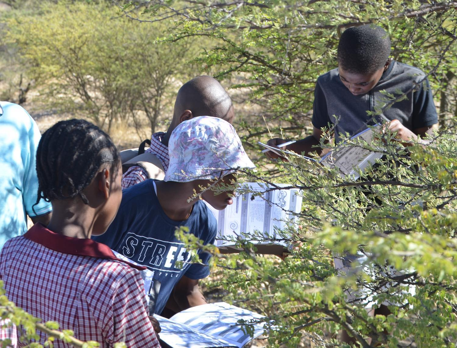 A group of KEEP students study an acacia tree