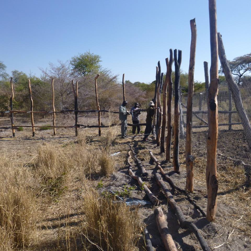 A group of people work on upgrading a kraal (livestock enclosure).