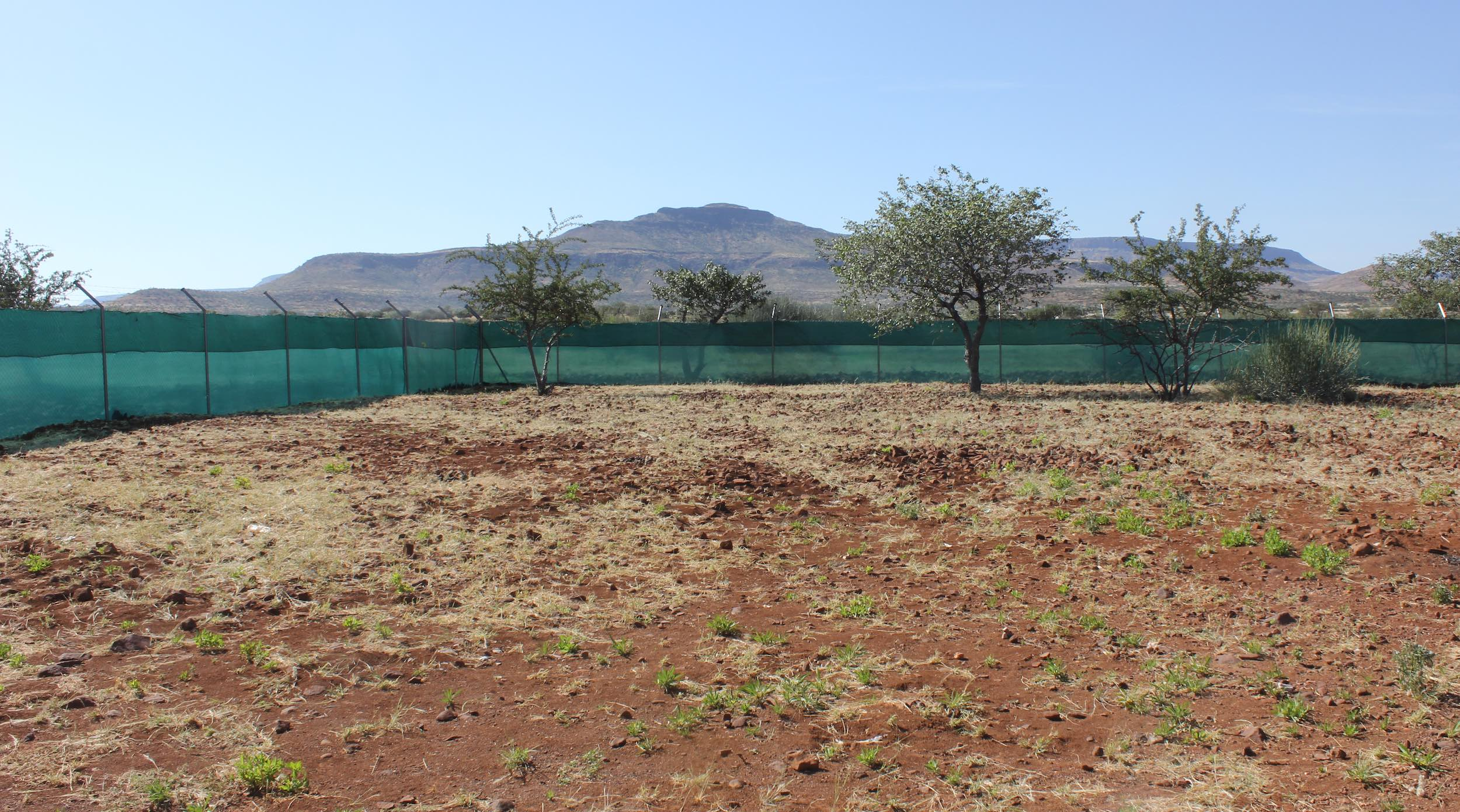 A large kraal fenced and shaded against predators.